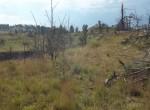 hillside-