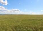 pasture56
