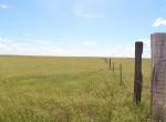 pasturee